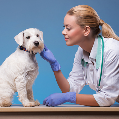 veterinary coursework The navta-approved veterinary assistant college degree penn foster offers helps students prepare for a career as a vet assistant with an advanced curriculum.