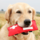First Aid for Canines Course Level 4