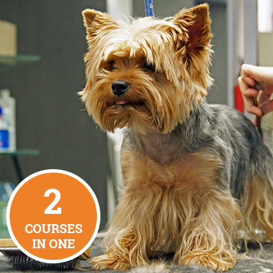 Dog Grooming Bundle Course