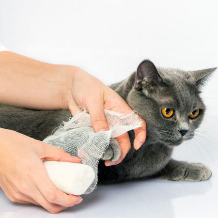First Aid for Kittens and Cats Course