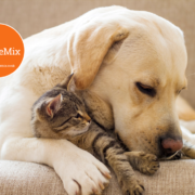 Animal Care Course Online