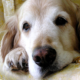 Caring for Senior Pets