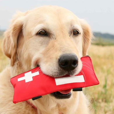 Pet First Aid and CPR
