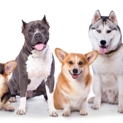 Dog Breed Training